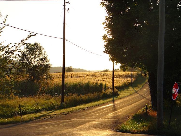 Setting sun delineates a cornfield along a country road