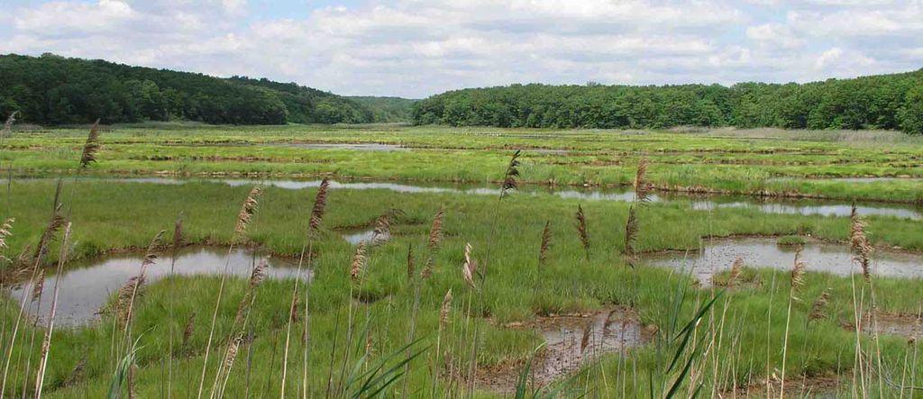 Bride Brook salt marsh  East Lyme, CT by Alex756