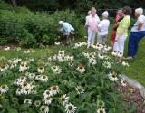 White coneflowers were abundant.