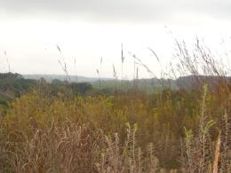 Audubon supports growing native grasslands for wildlife.