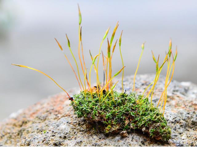 Sporophtes and Gametophytes