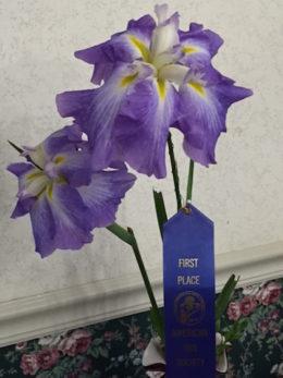 Brenda's Iris Winner