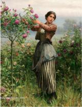Cutting Roses, Daniel Ridgeway Knight