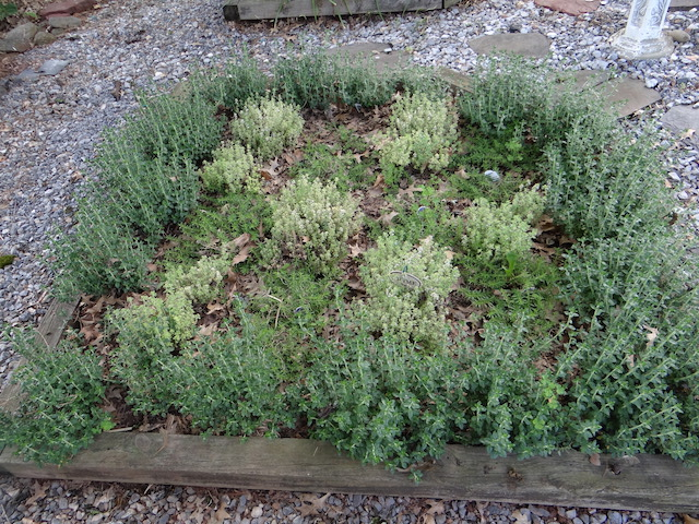 Herb knot garden carroll garden club for Herb knot garden designs