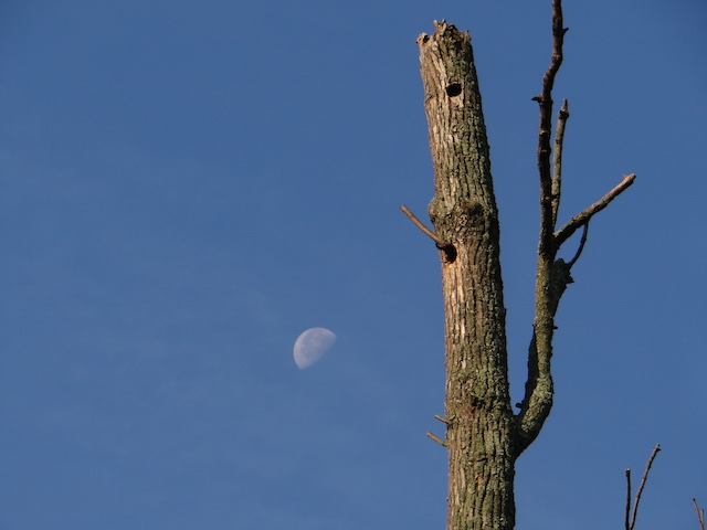 Ash Moon